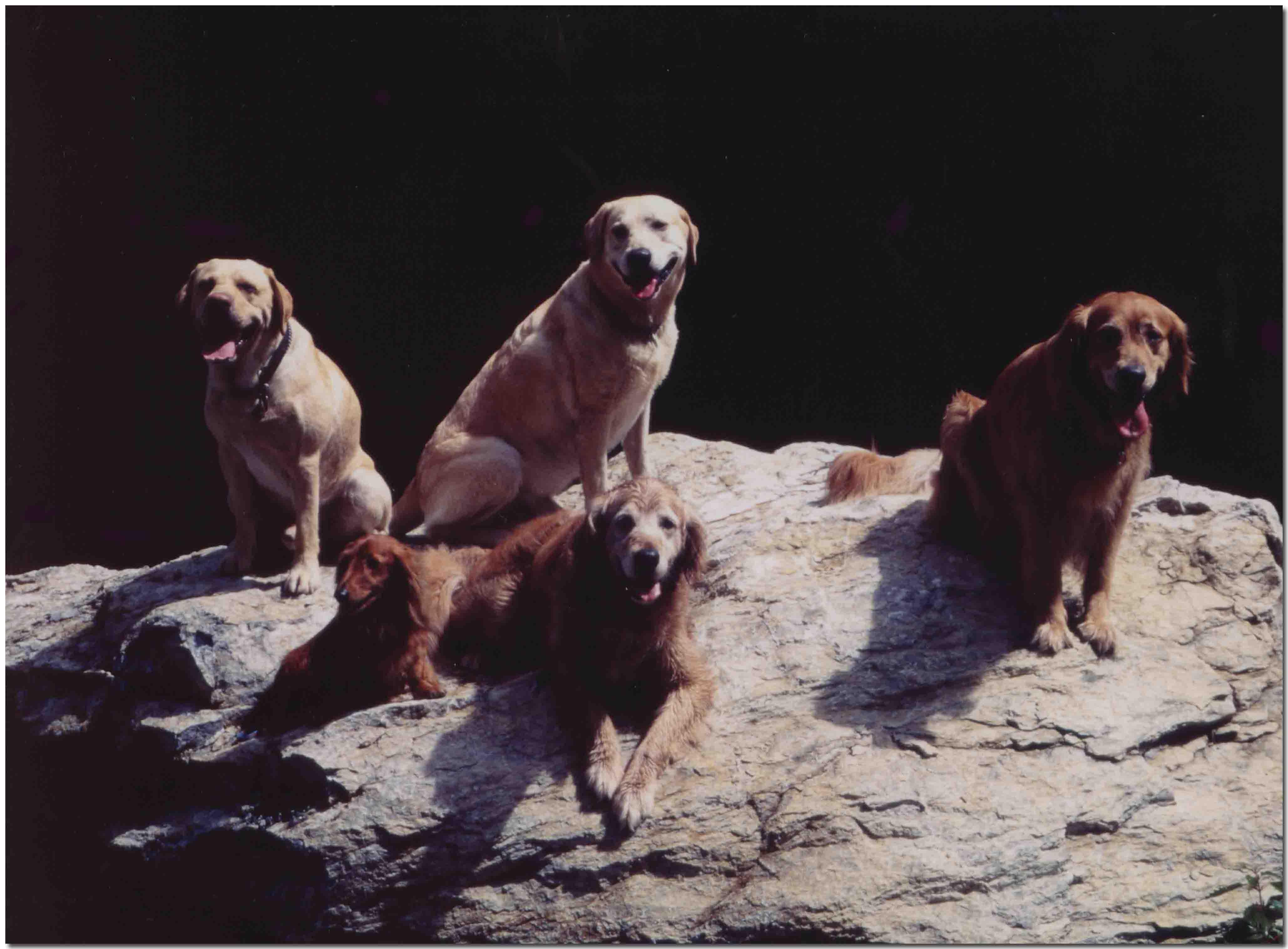 2001年7月1日の三峰川(石の上に5頭)