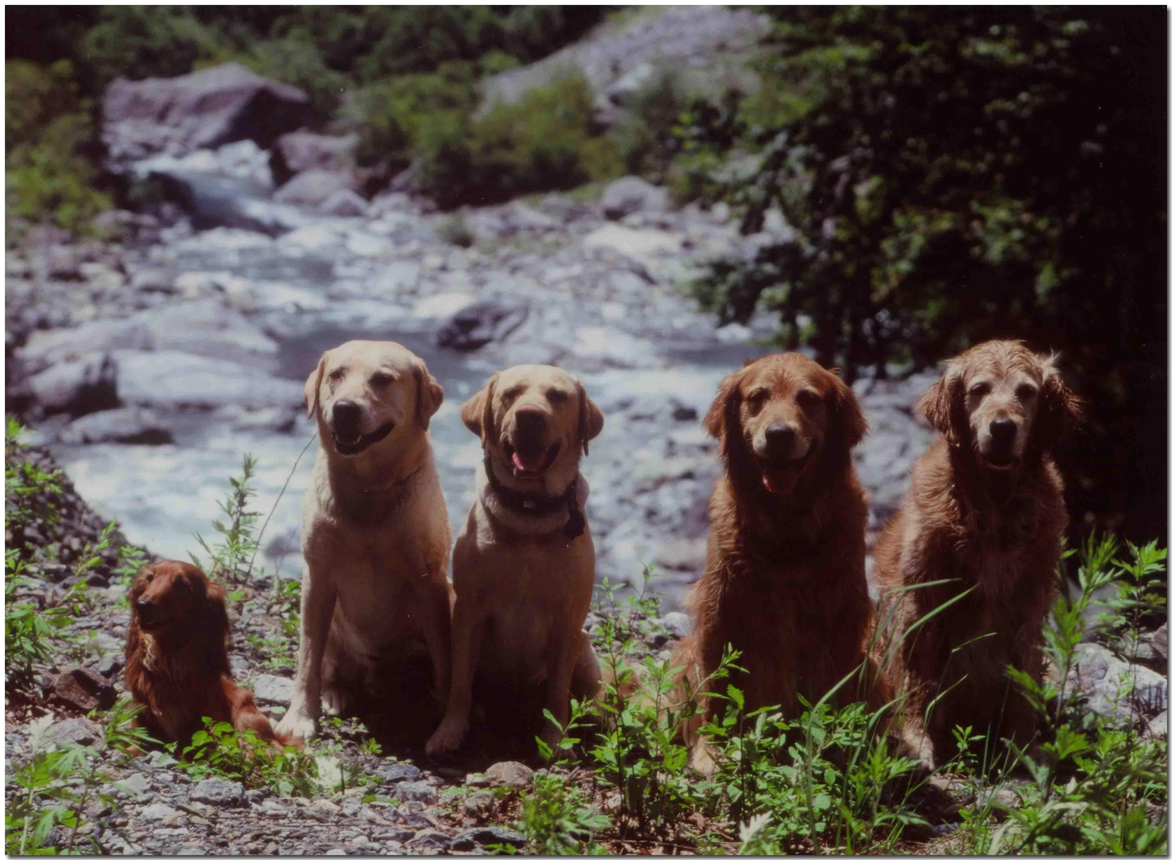 2001年7月1日の三峰川(5頭横並び)