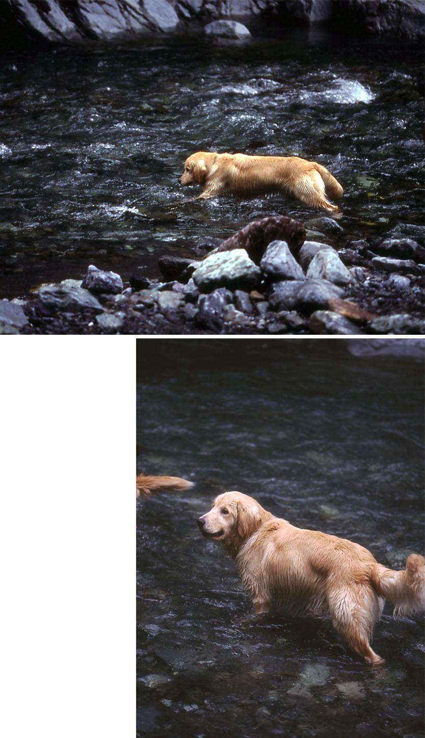 2003年7月の三峰川 ③