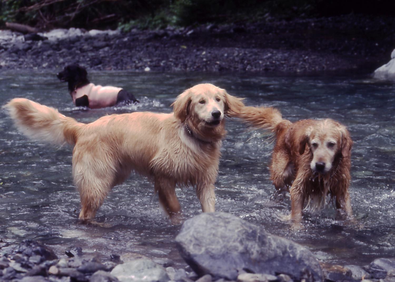2003年7月の三峰川 6A 圧縮