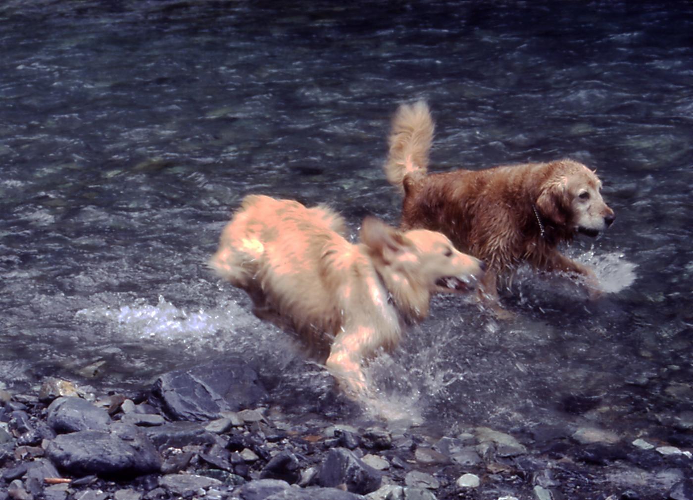 2003年7月の三峰川 7A 圧縮