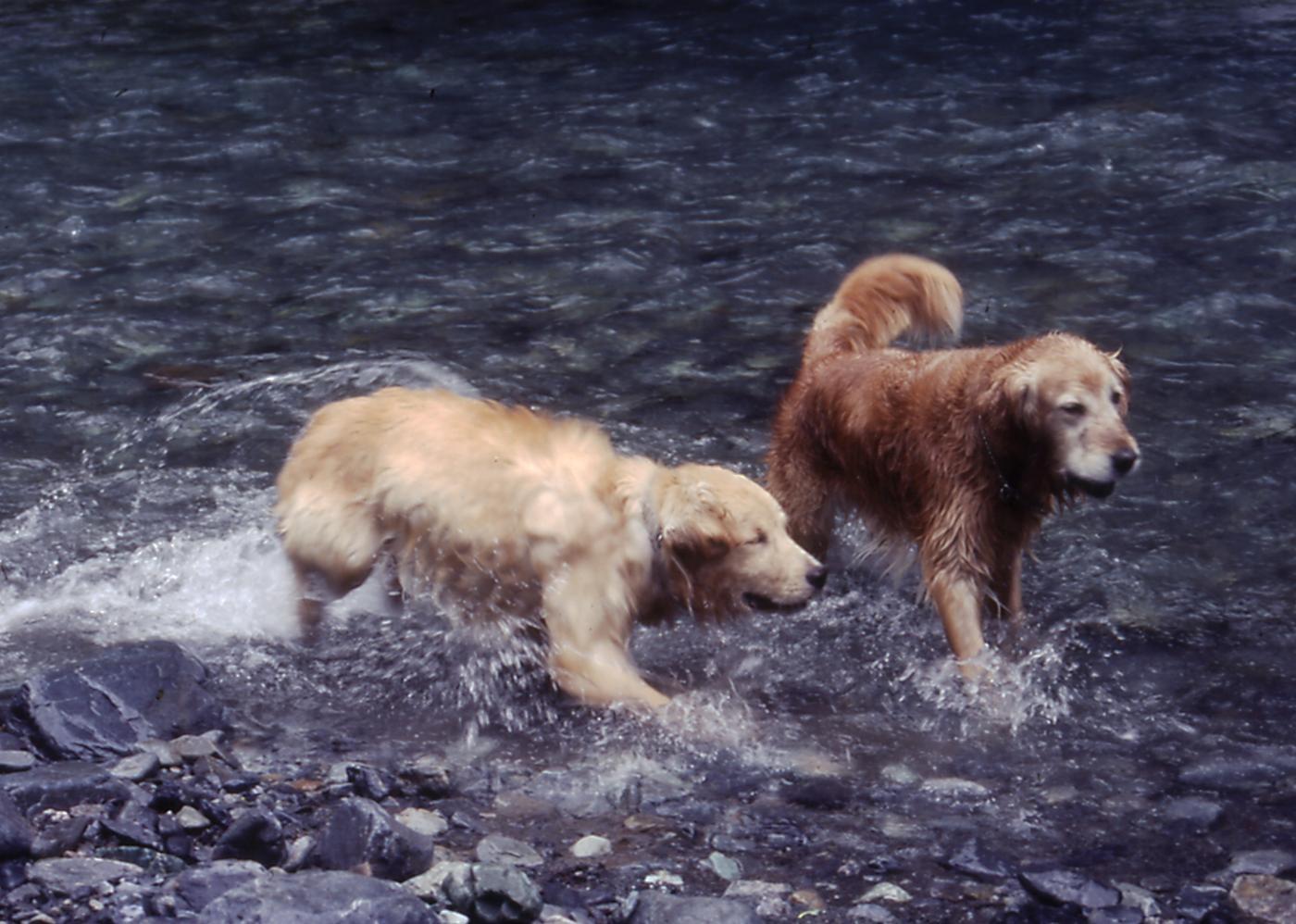 2003年7月の三峰川 10A 圧縮