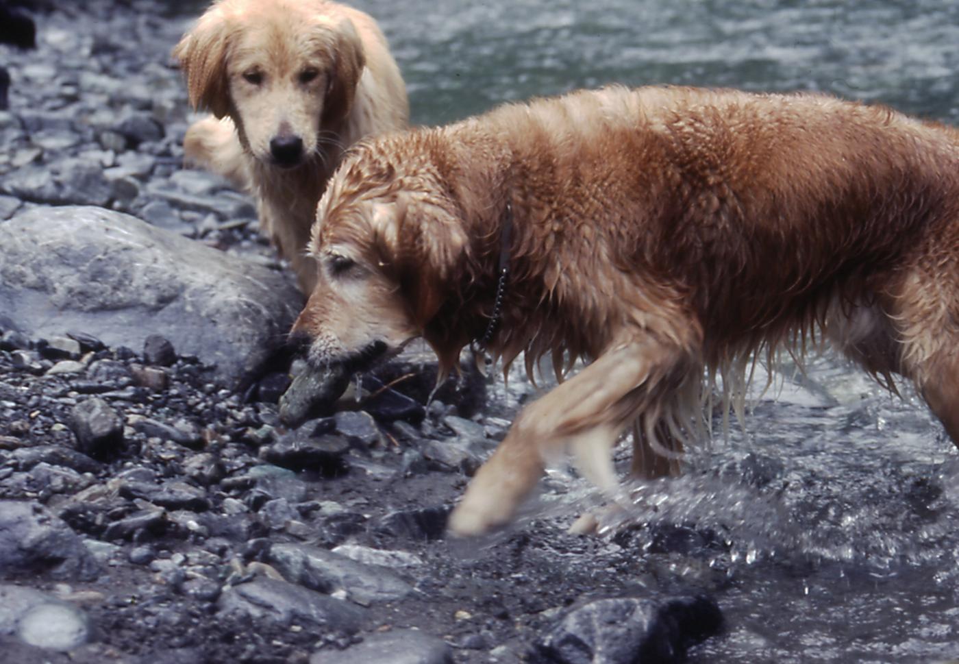 2003年7月の三峰川 20A 圧縮
