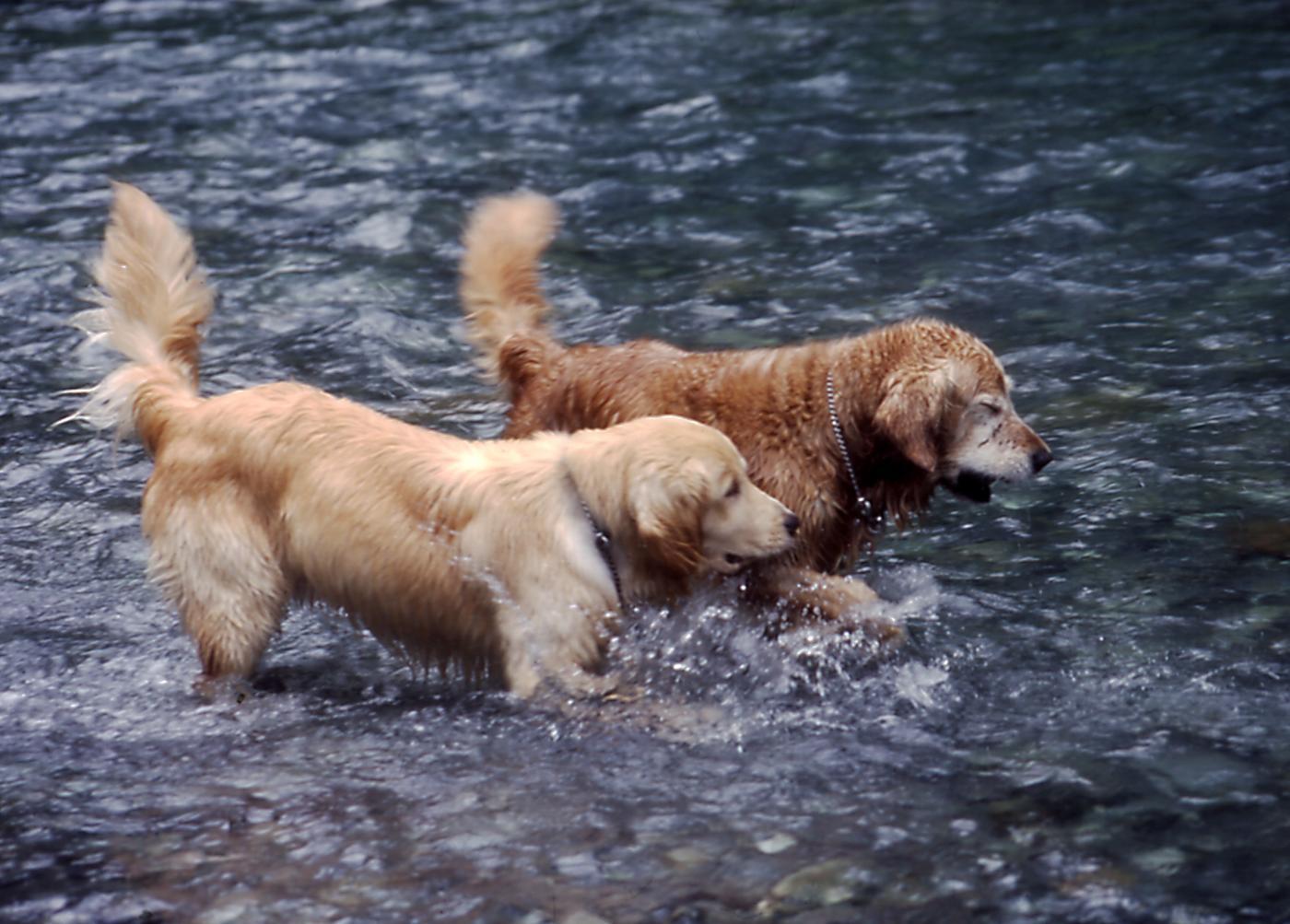 2003年7月の三峰川 35 圧縮