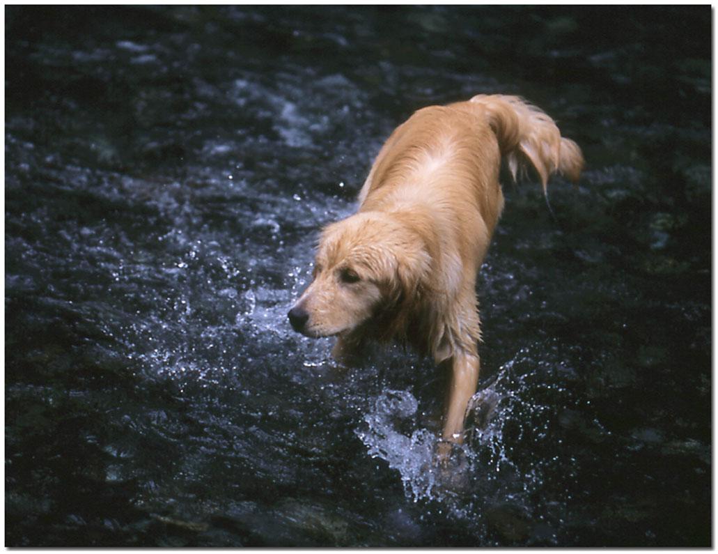 2003年7月の三峰川 NW(1) 圧縮