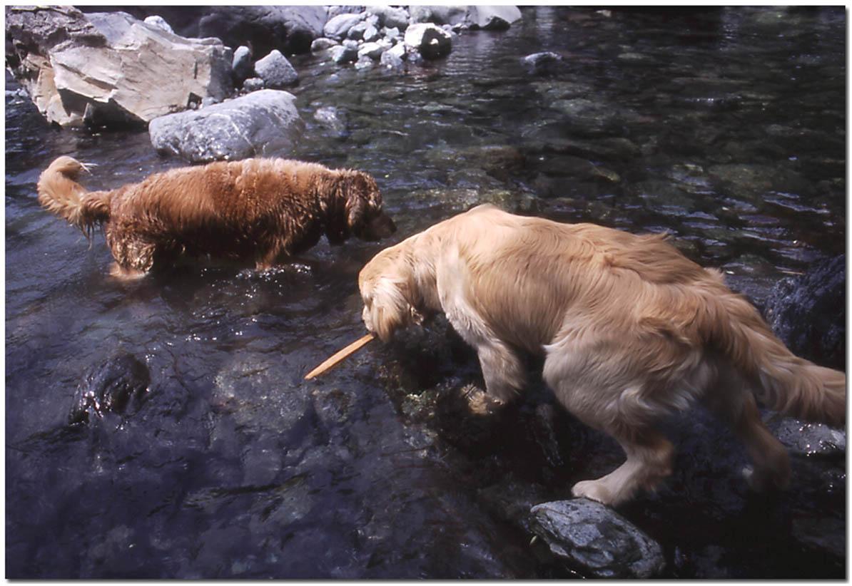 2003年7月の三峰川 NW(2) 圧縮