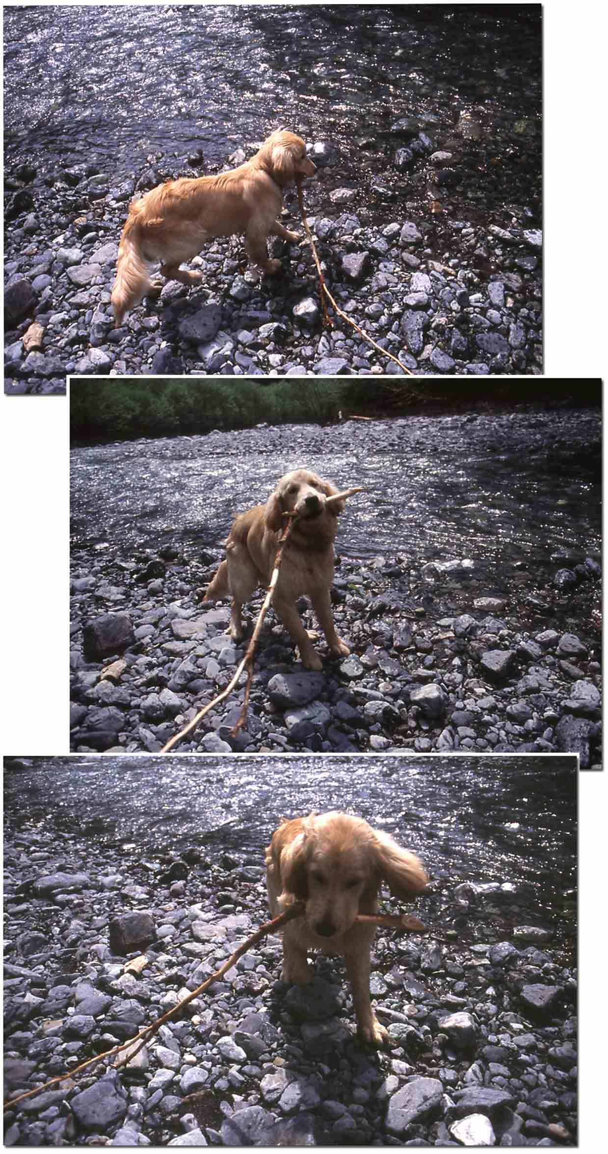 2003年7月の三峰川 NW(3)~(5) 圧縮