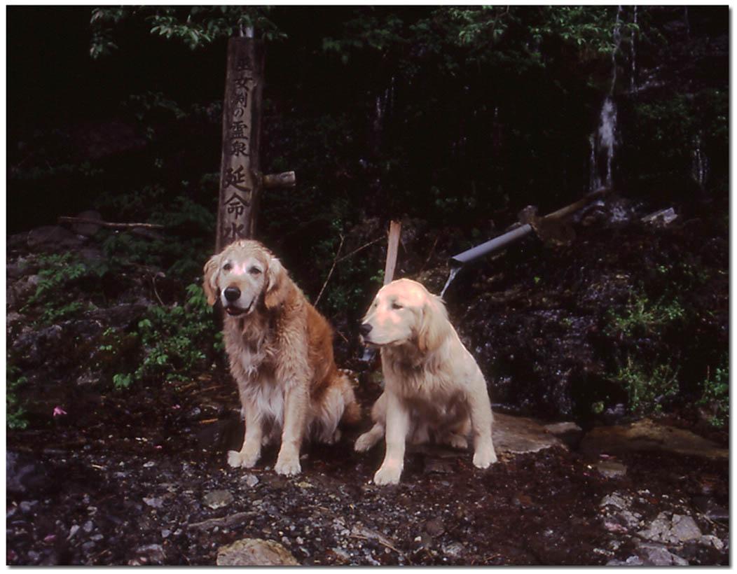 2003年7月の三峰川 NW(6) 圧縮