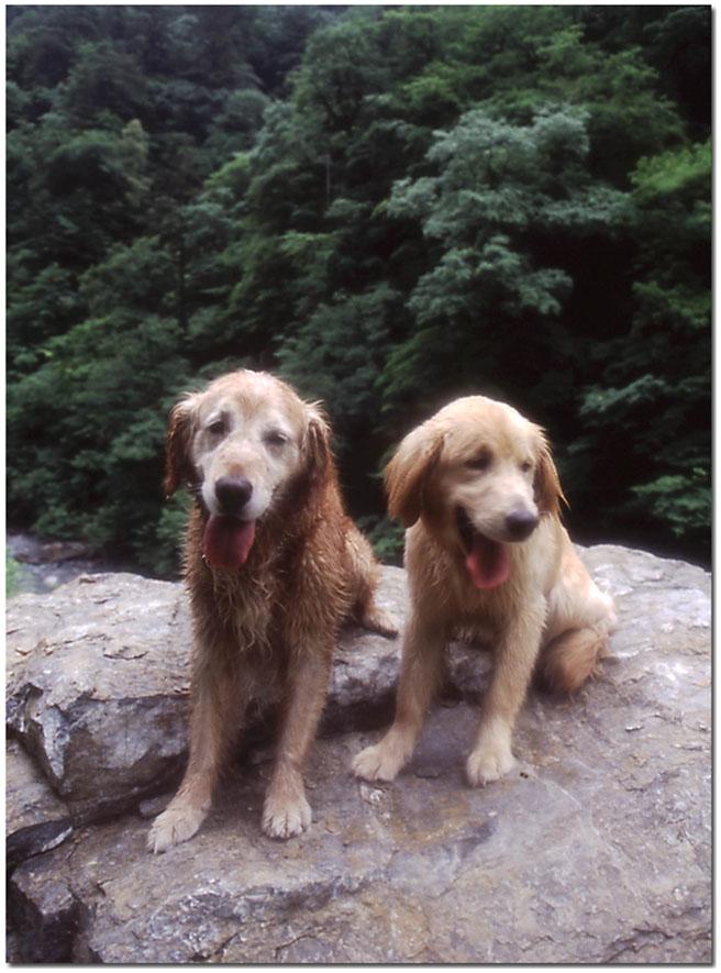 2003年7月の三峰川 NW(9) 圧縮