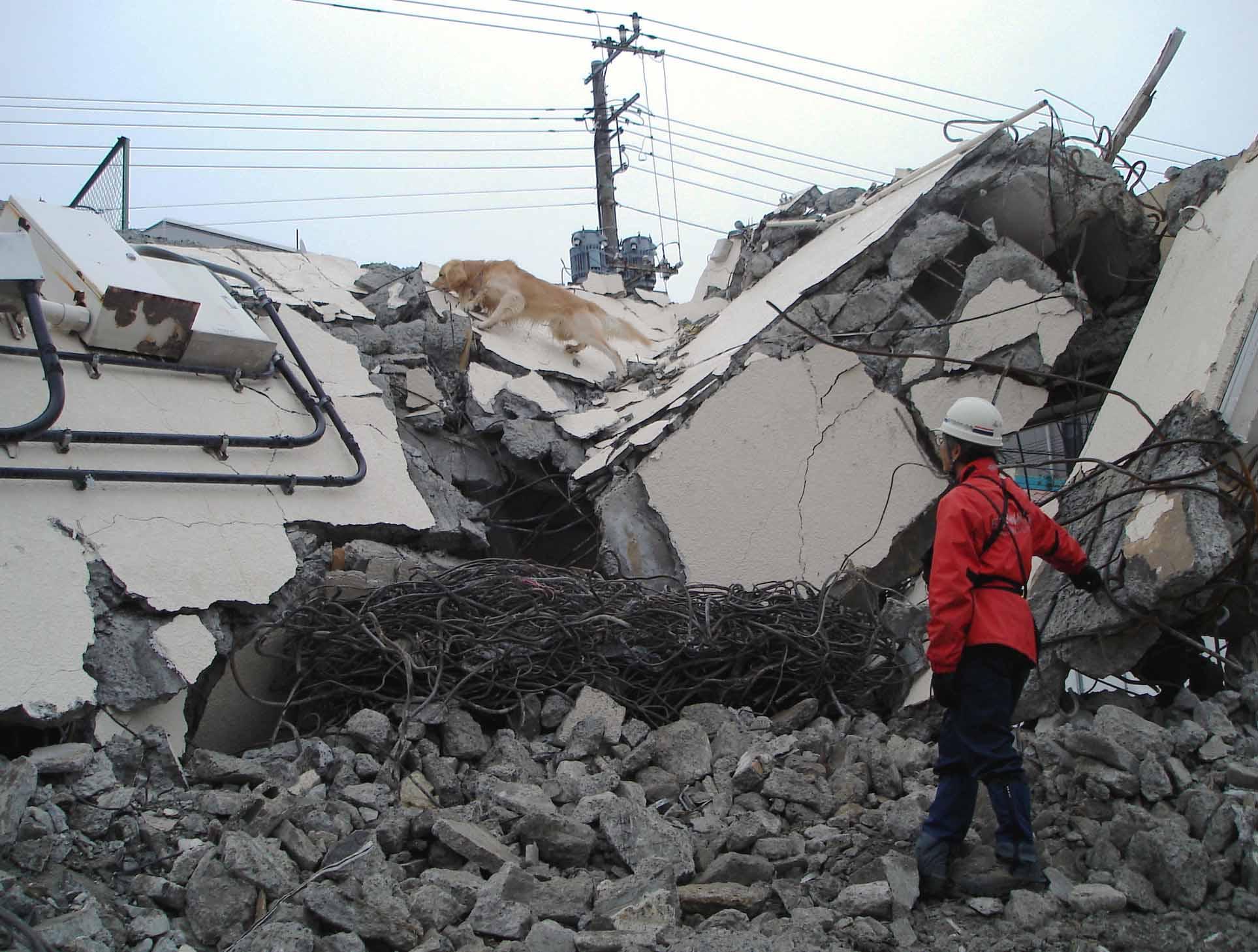 瓦礫の中のシグマシュード捜索