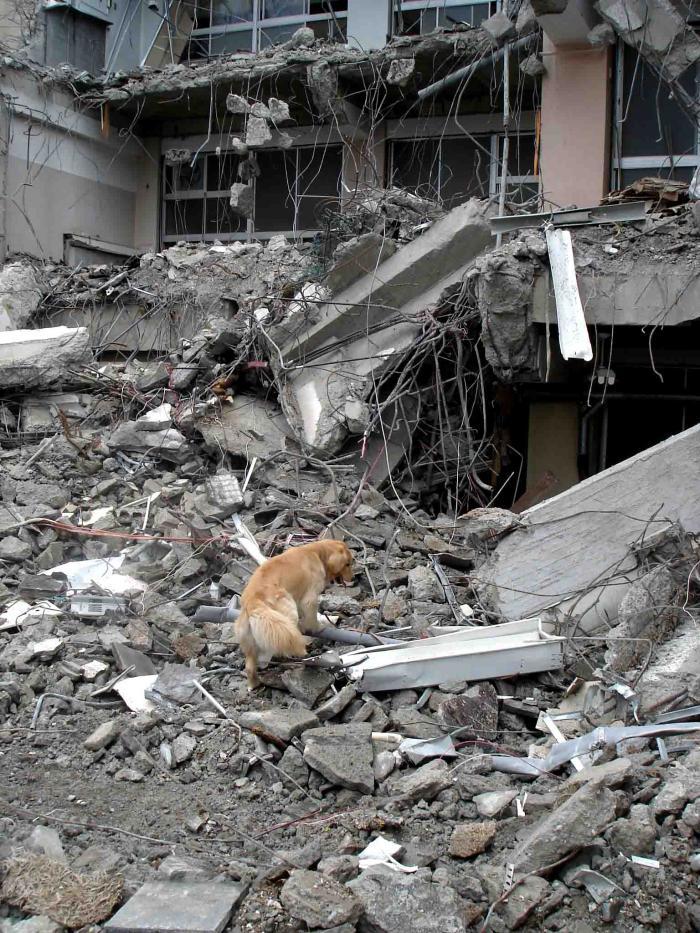 Dsc06027 午後の瓦礫捜索①