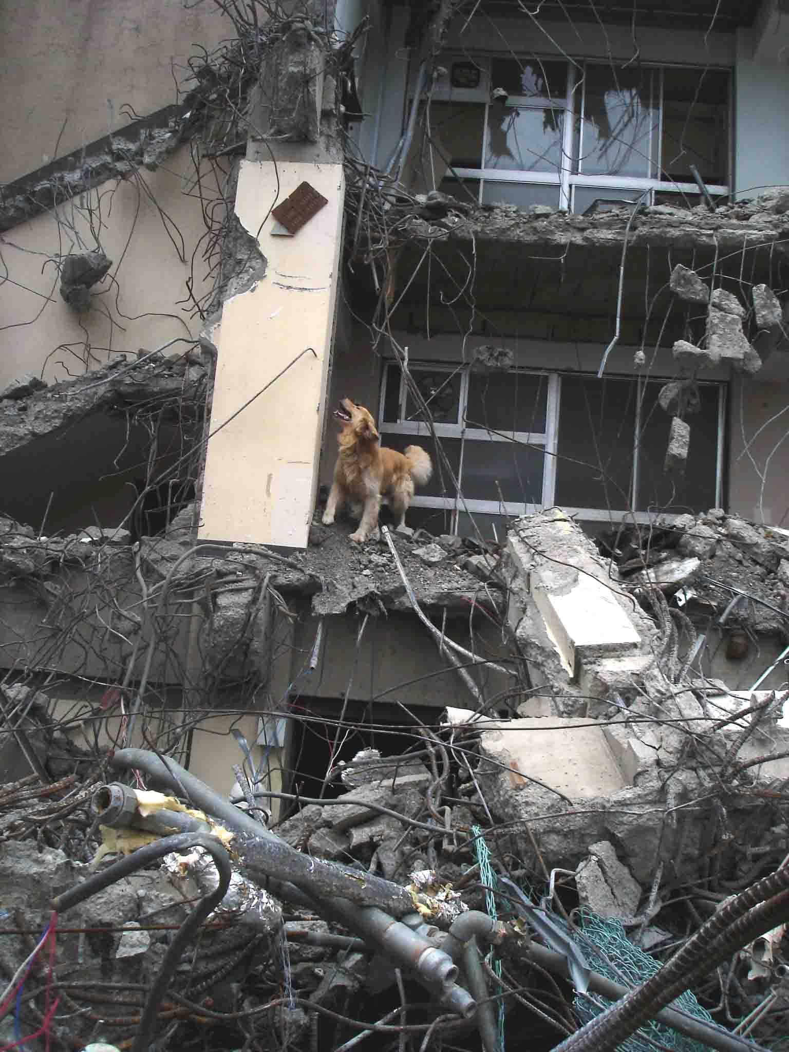 Dsc06031 午後の瓦礫捜索④