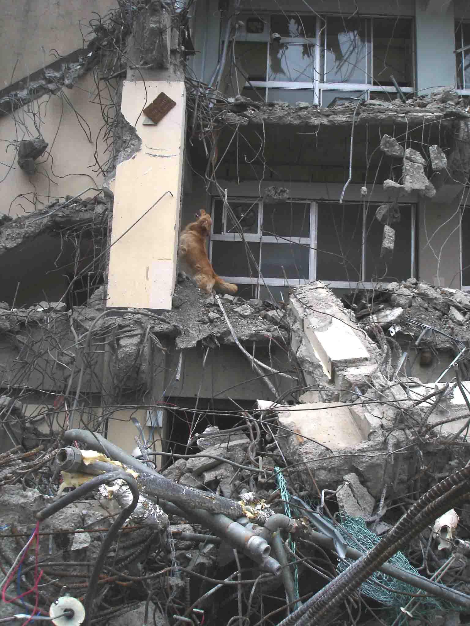 Dsc06032 午後の瓦礫捜索⑤