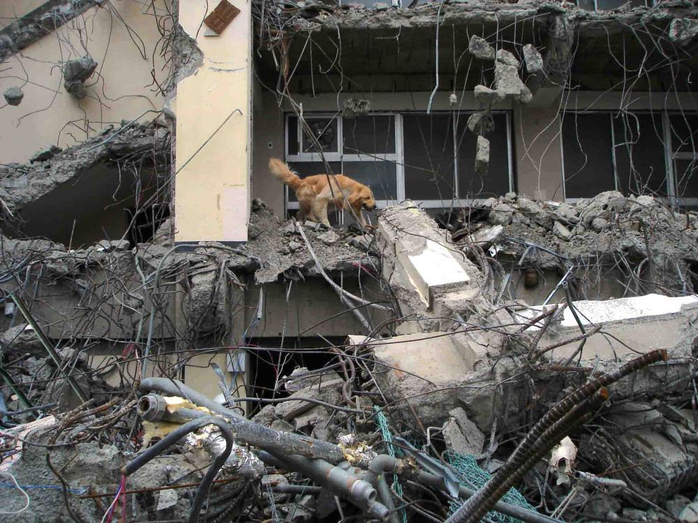 Dsc06034 午後の瓦礫捜索⑥