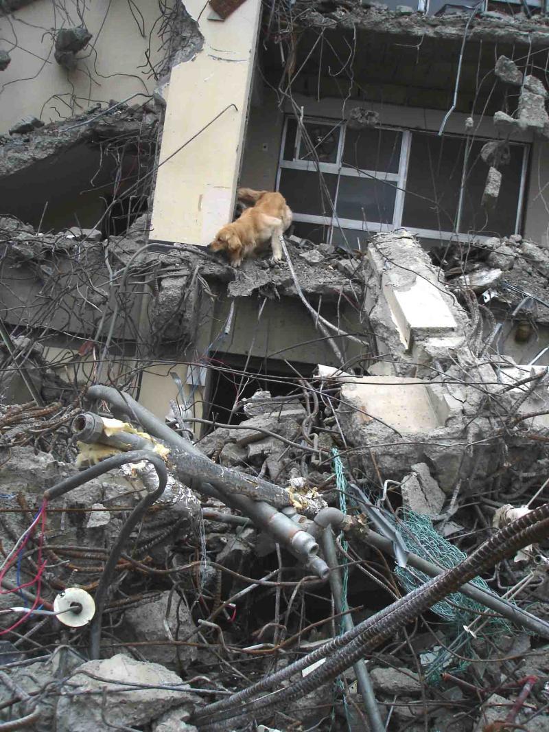 Dsc06036 午後の瓦礫捜索⑦