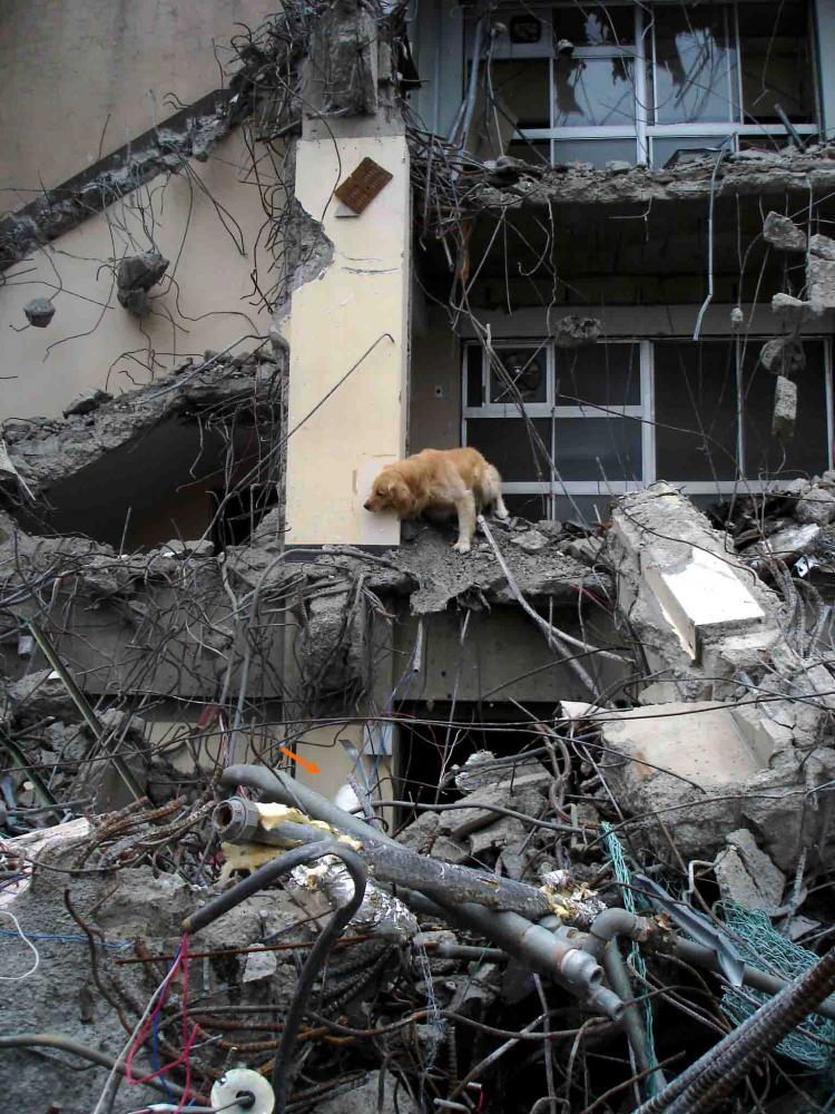 Dsc06037 午後の瓦礫捜索⑧