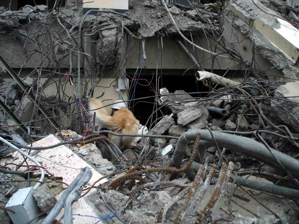 Dsc06039 午後の瓦礫捜索⑨