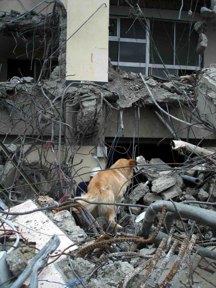 Dsc06040 午後の瓦礫捜索⑩