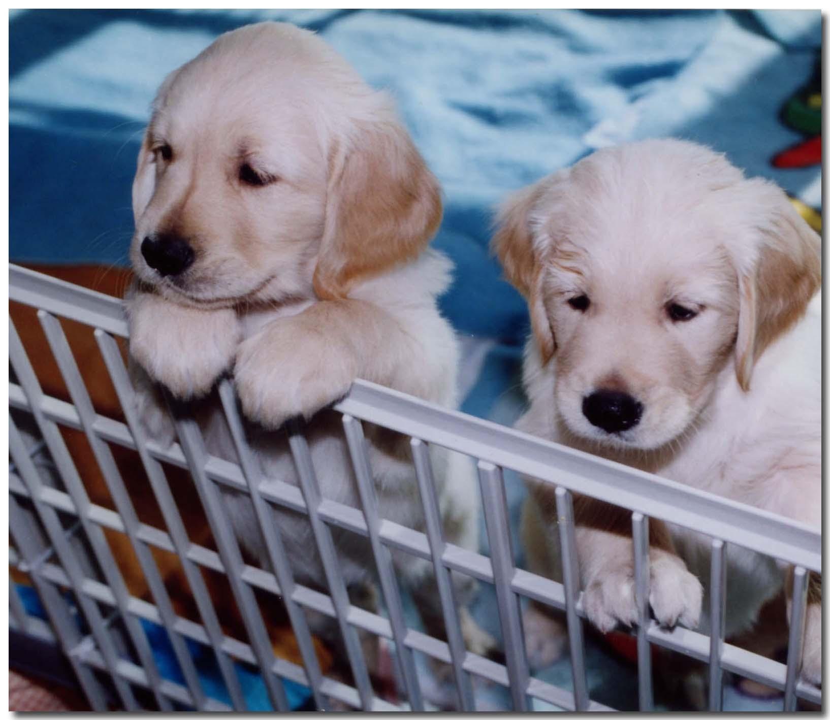 2002.11 子犬テストの日のチャンス(右)