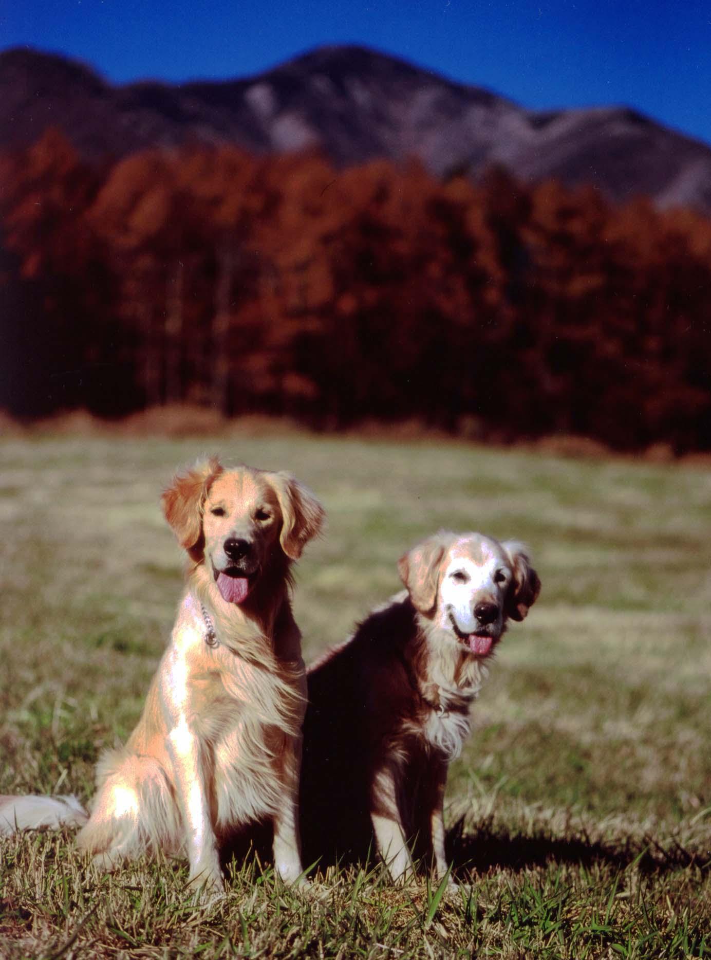 八ヶ岳で(2005.11)③