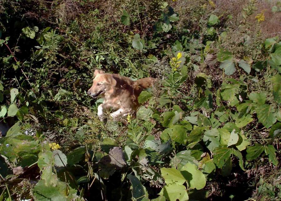 1103④ 捜索中の犬