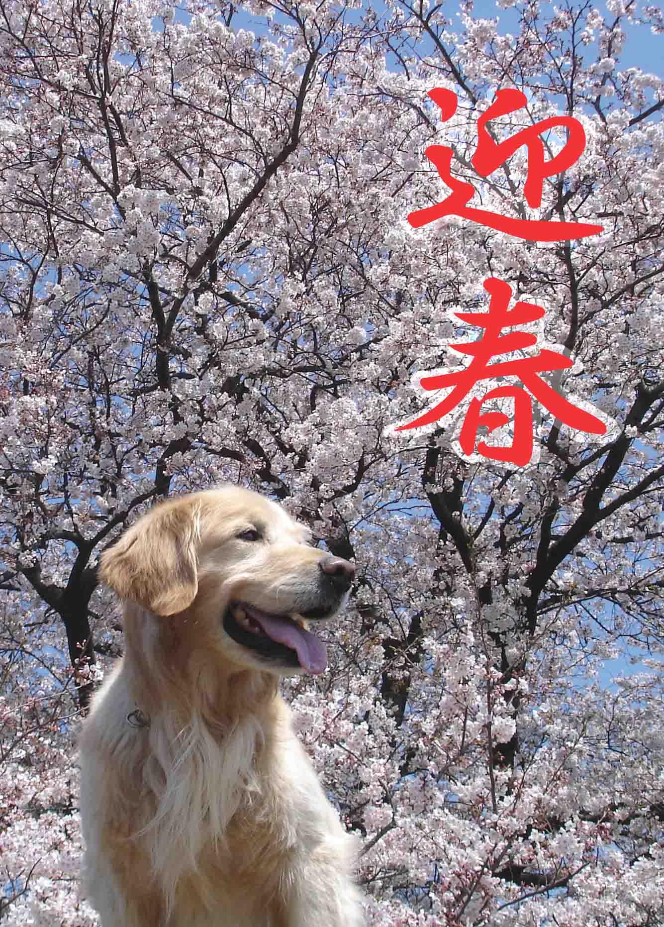 DSC05640 編集 迎春