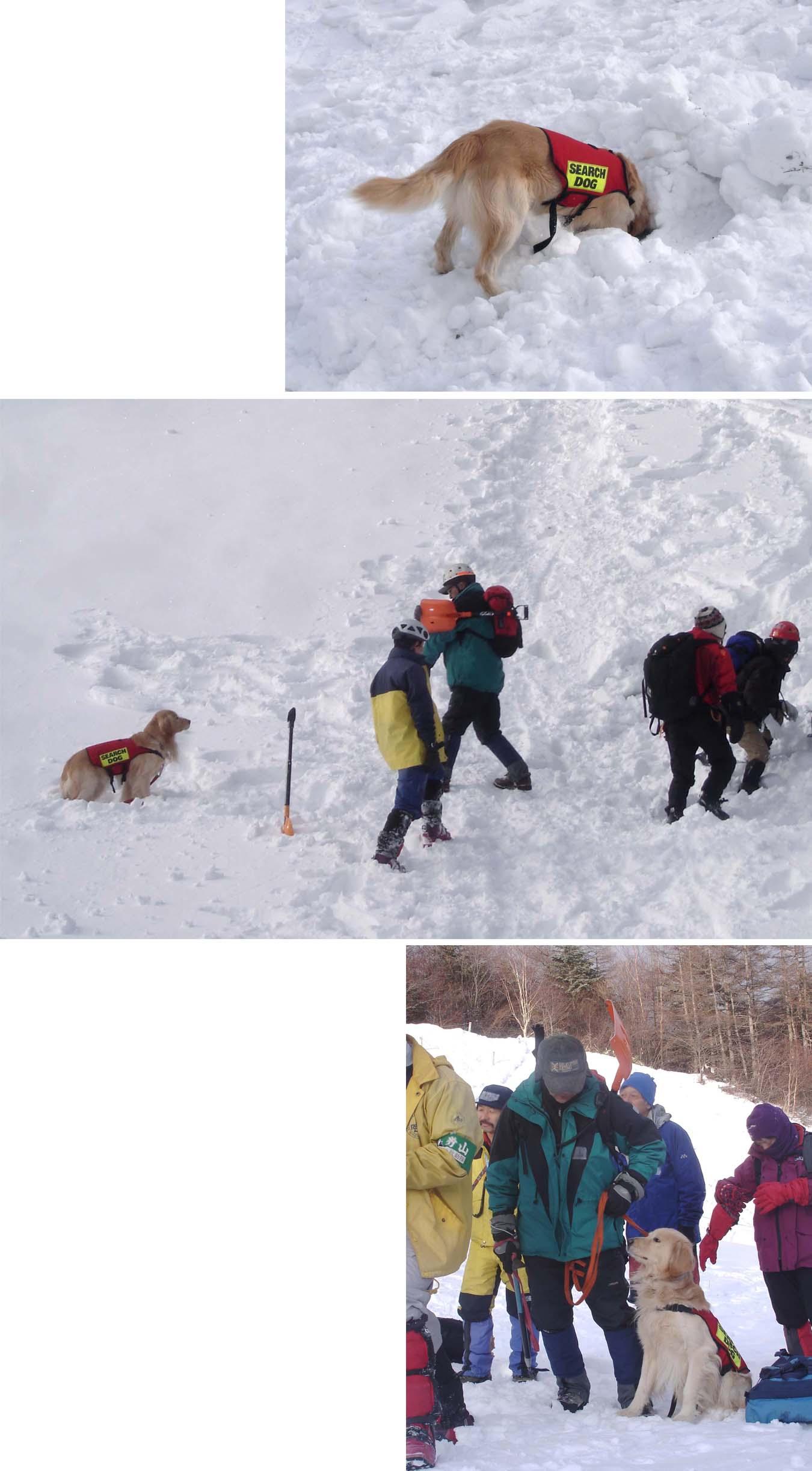 チャンスの雪崩講習会(2008)②