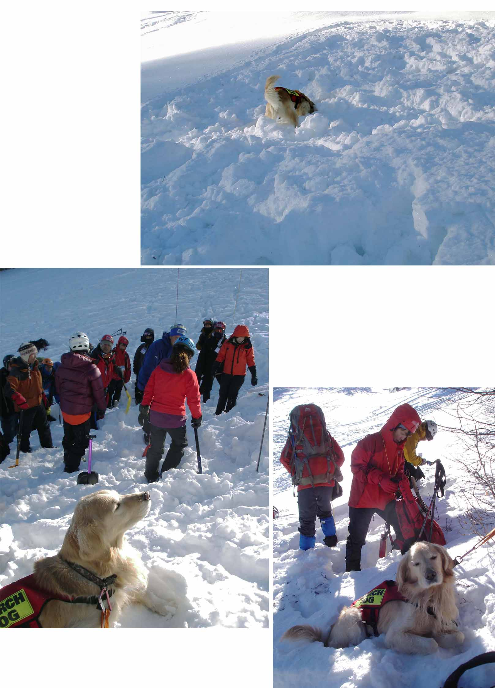 チャンスの雪崩講習会(2010)