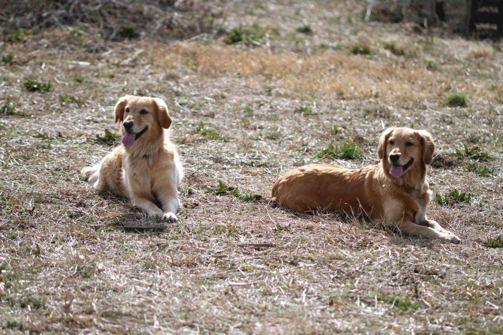 姉妹犬(20110306)①