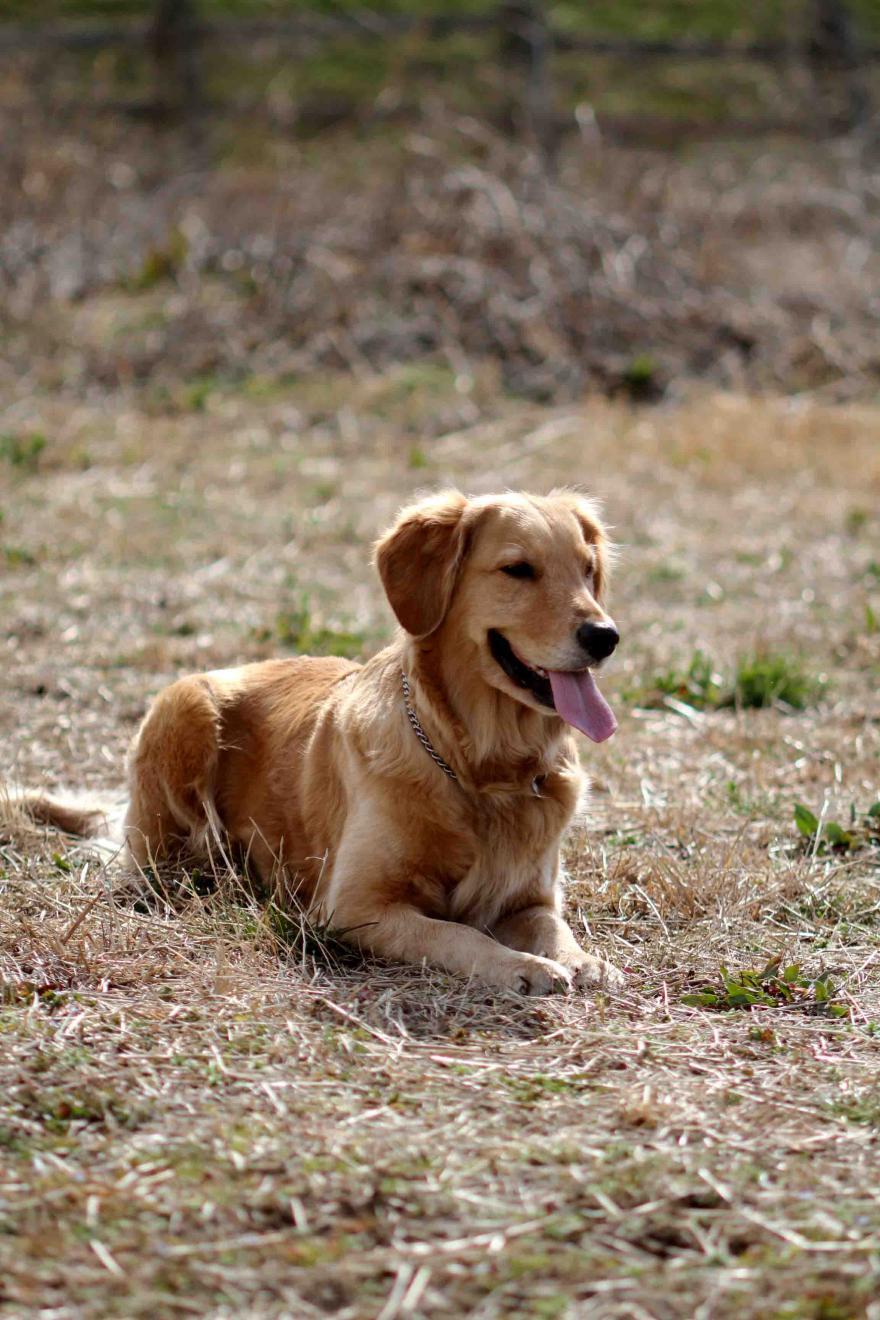 姉妹犬(20110306)② M