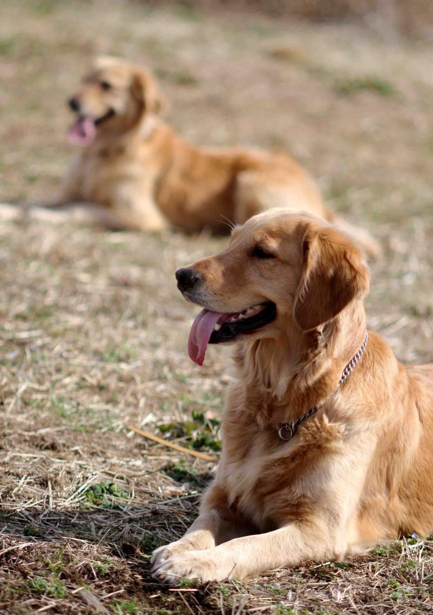 姉妹犬(20110306)③ M