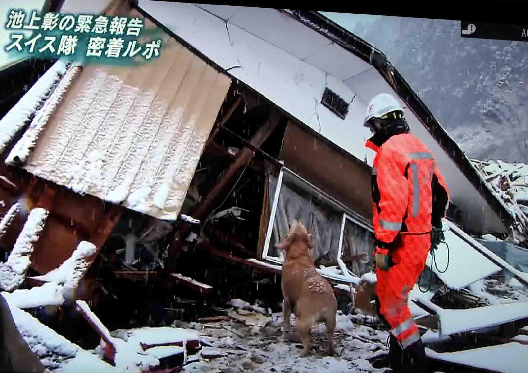 スイス救助犬⑤