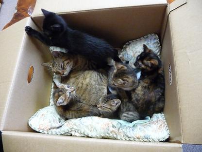 5匹の子猫とお世話のおねえちゃん