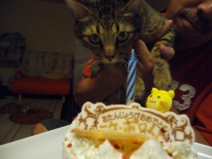 ケーキとポロ