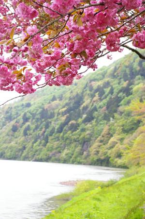 mogamigawa.jpg