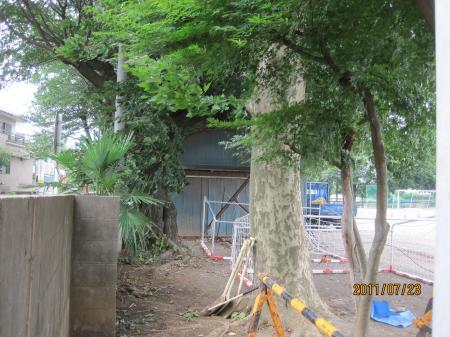 IMG伐採される樹木清中_6145_convert_20110725001444