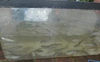 魚CIMG3791_convert_空堀20110809212753