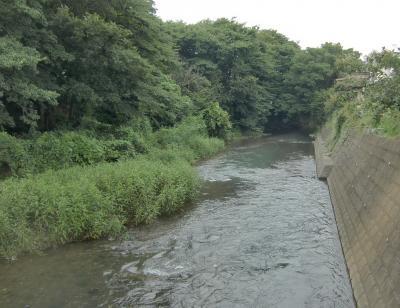 河畔林CIMG3883柳瀬_convert_20110826211022