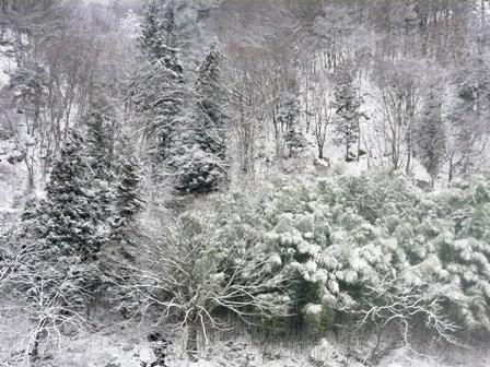 雪が来ました2