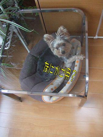 091008-niwa4.jpg