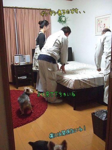 091210-bed.jpg