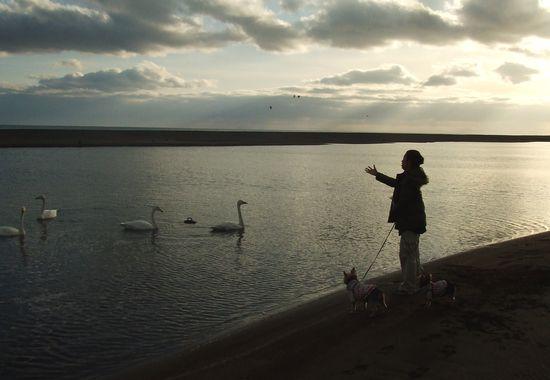 091213-swan3.jpg