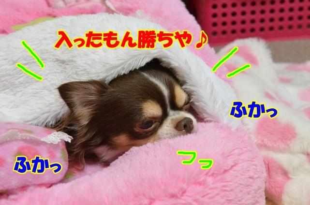 DSC_1533.jpg