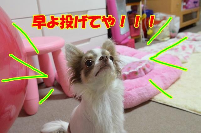 DSC_1604.jpg