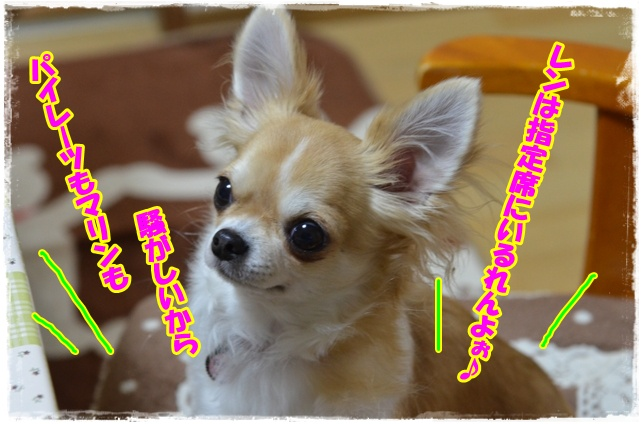 DSC_2783.jpg