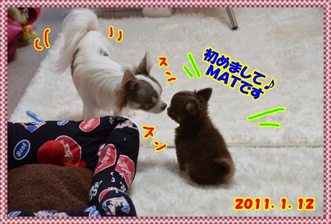 DSC_2973_20120112225029.jpg