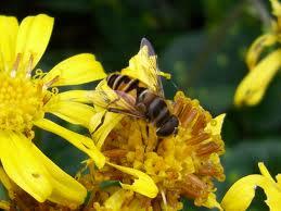 1ミツバチ
