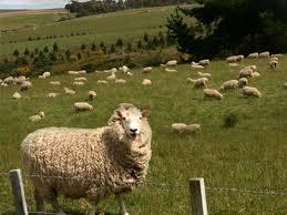 1ニュージーランド