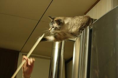 ビリヤード猫