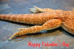 web_valentine_2010.jpg